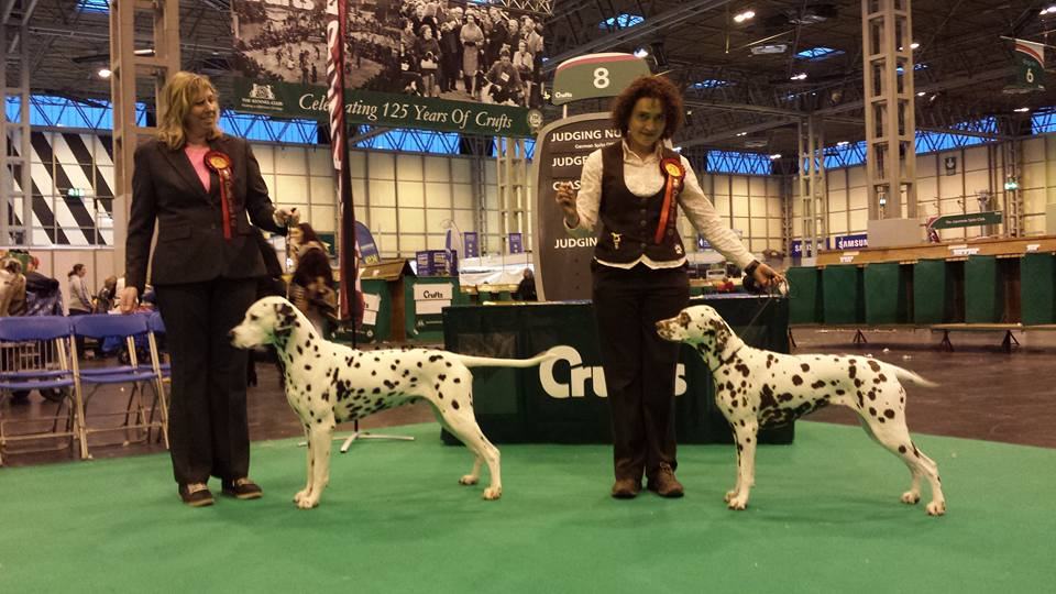 Solbo's Kayo at crufts 2016
