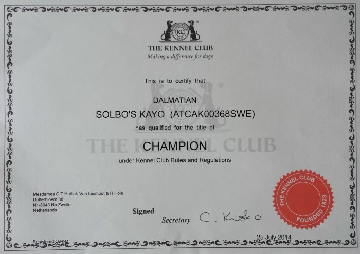 Solbo's Kayo is now champion of england