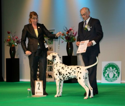Solbo's Kayo resverve best in group at Dog of the Year show 2012