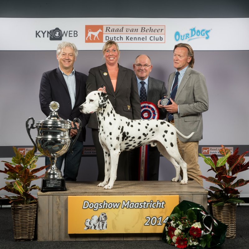 Solbo's Kayo Best in Show