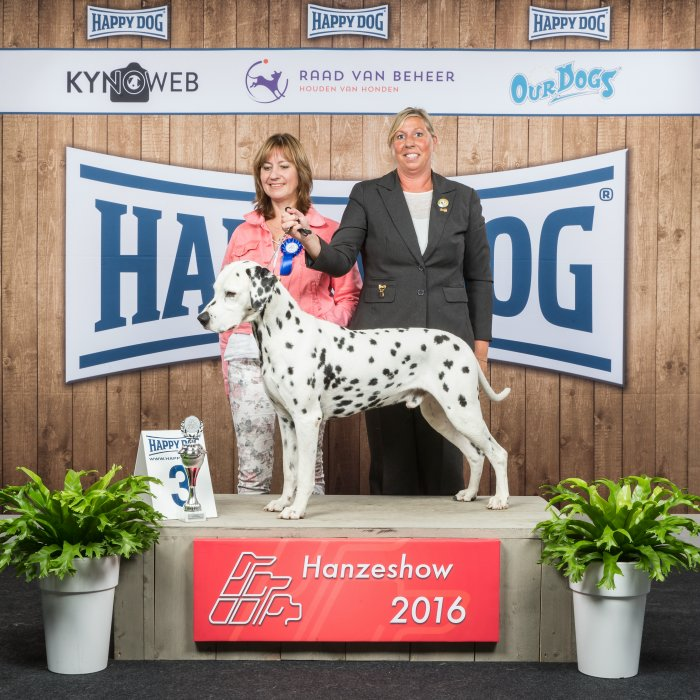 Solbo's Kayo best in Show 3 Zwolle veteran